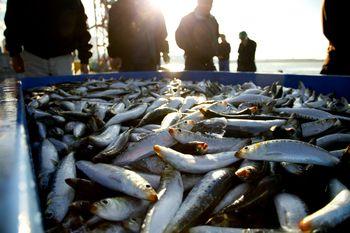 20121027_石巻仮設漁港撮影_S108
